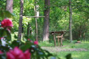 """Waldgottesdienst """"Aufbruch und Segen"""" @ Johanniter-Krankenhaus im Fläming Treuenbrietzen, Park am alten Brunnen"""
