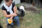 Leckerli für Schweinchen Fredi