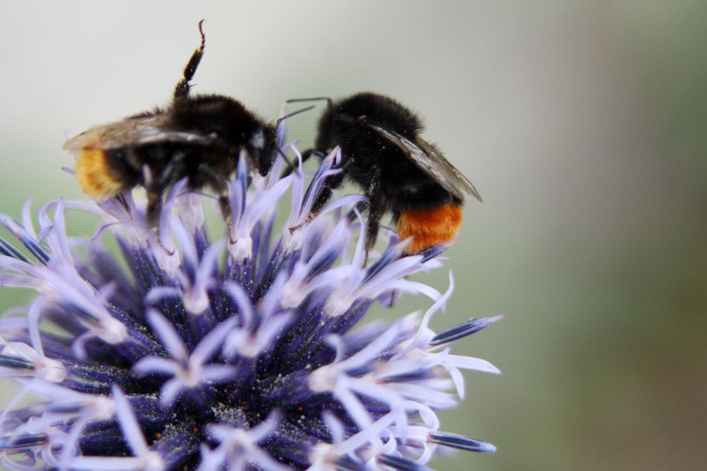 Eva-Loth-Bienen