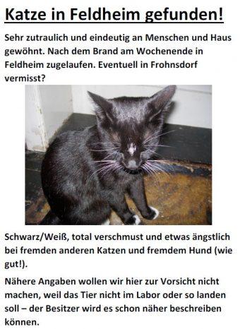 Katze in Feldheim gefunden