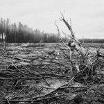 Waldbrand, Christian Friedrich, Frohnsdorf, verkohlte Bäume