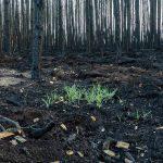 Waldbrand, Ramona Gardosch, Frohnsdorf, verbrannter Wald