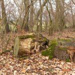 Rundweg Lindau, Naturpark Fläming