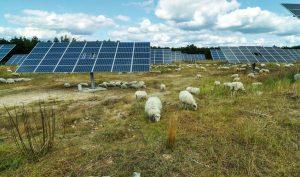Energietour Solarfreiflächenanlage Selterhof