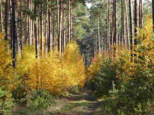 Herbstliche Farben