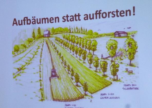 Baumfeldw 1