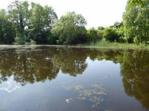 Reetz, Dorbegehung, Reetzer Teich