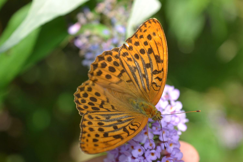 Gruene-Schmetterling-q
